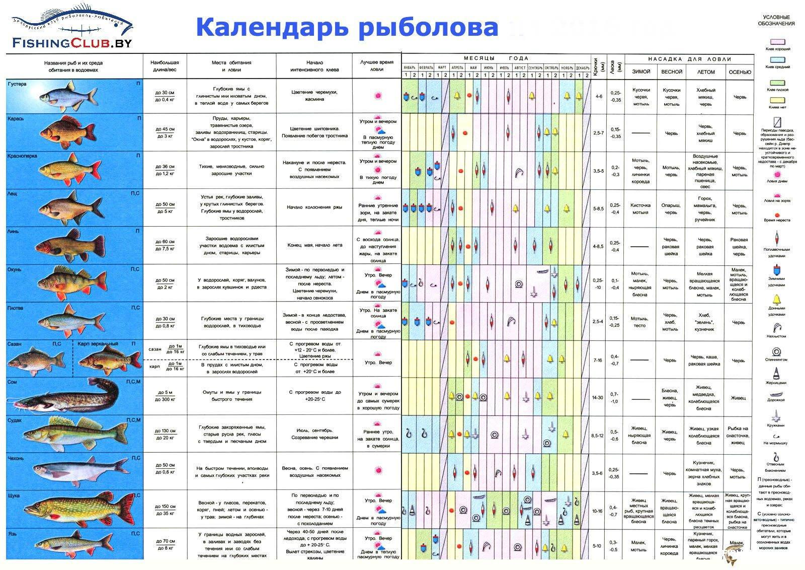 Новости нижневартовска россия 24
